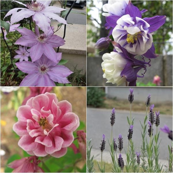 庭のお花1 15-05