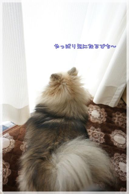 ぱとろ~る9 15-05