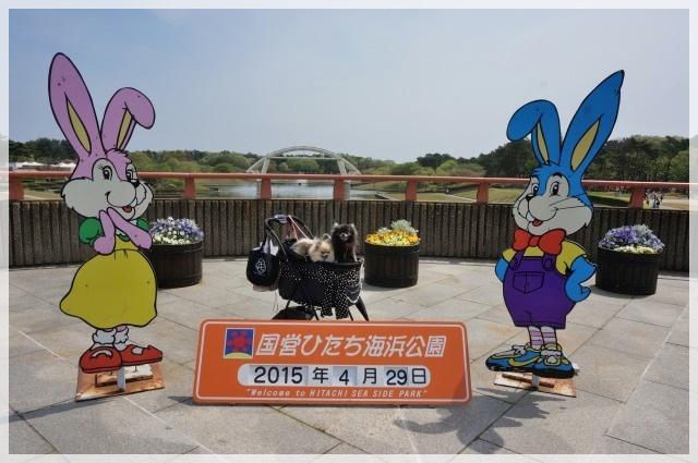 ひたち海浜公園3 15-05