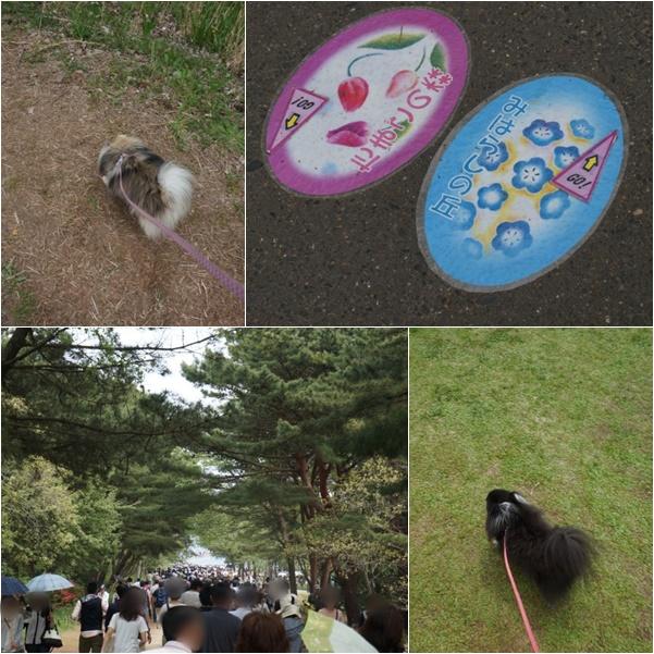 ひたち海浜公園12 15-05