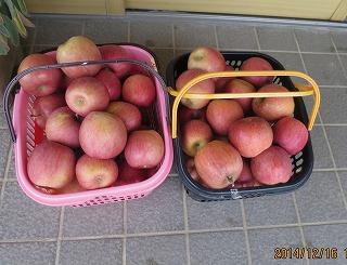 積み残したリンゴ