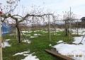 根雪にはならず・リンゴ園