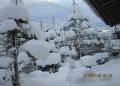 雪吊りOK