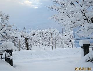 堆雪帯の雪