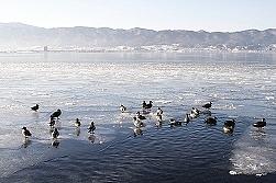 諏訪湖・氷点下7度(氷の切れ目でオオワシ「グル」)