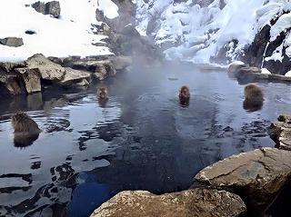 猿が温泉に
