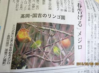 メジロの記事(高岡国吉のりんご園)