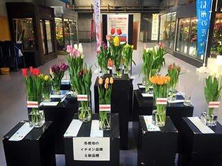 富山の花展示・大田市場
