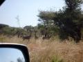 ケニアのサファリー