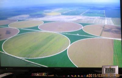 豪州の大豆畑