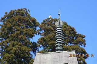 寺の屋根と鷺