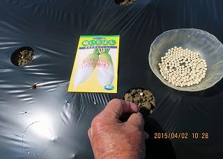 大根種蒔き