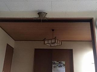 燕の巣・リホーム