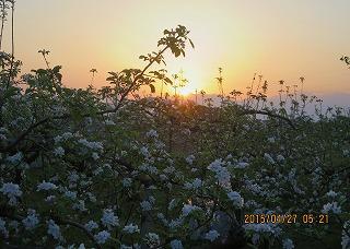 花の上に太陽