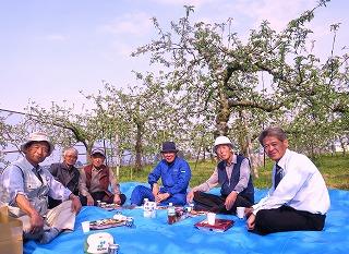 リンゴの花見