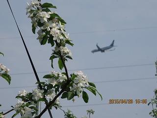 飛行機と花