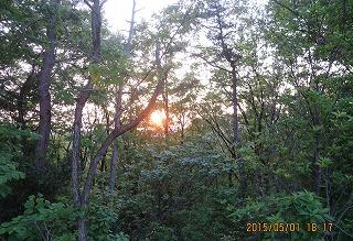 樹間に日が沈む