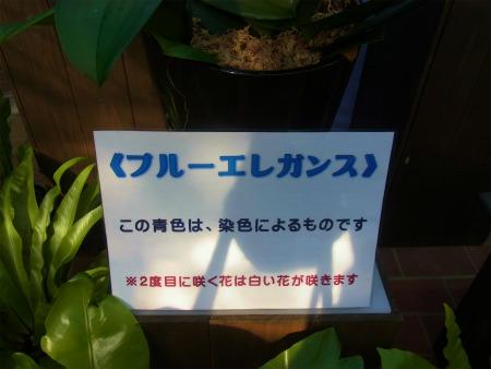 syukusyo-RIMG0681_20150124204612aa5.jpg
