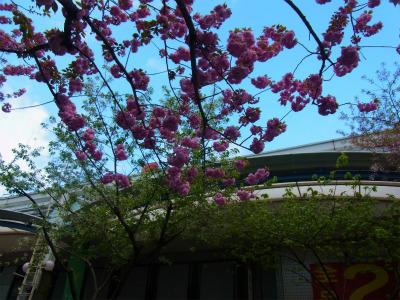syukusyo-RIMG0885_20150415171131007.jpg