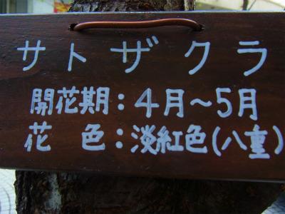syukusyo-RIMG0886_2015041517112800a.jpg