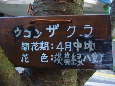 syukusyo-RIMG0890_20150415171203570.jpg