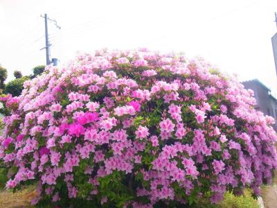 syukusyo-RIMG0927.jpg