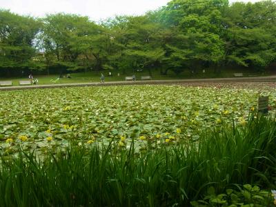 syukusyo-RIMG1009.jpg