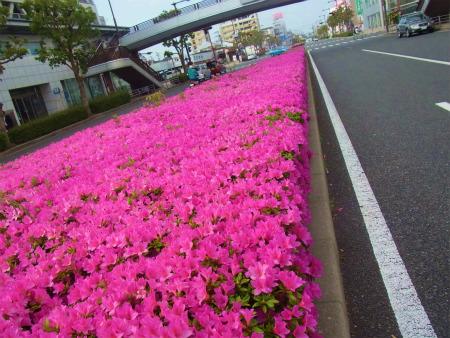 syukusyo-RIMG1028.jpg