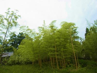 syukusyo-RIMG1242.jpg