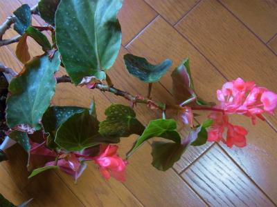 syukusyo-RIMG1268.jpg