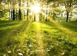 beautiful sunlight