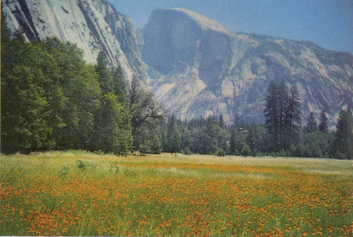 yosemite flower field