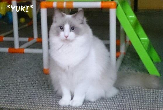 Cココユキ20150105image1