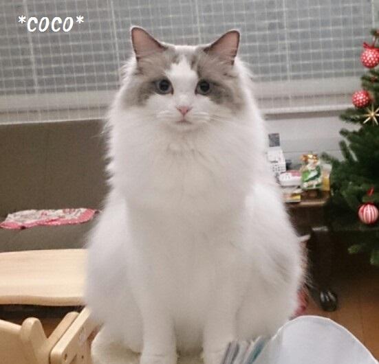 Cココユキ20150105image2