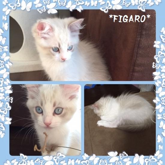 Cフィガロ20150524IMG_1398