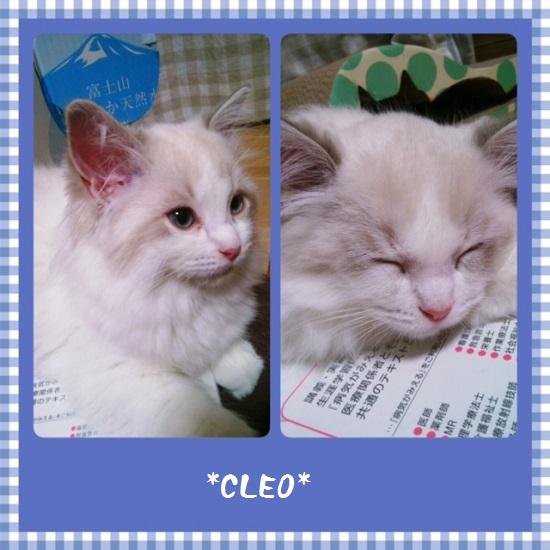 Cクレオ20150528IMG_1453