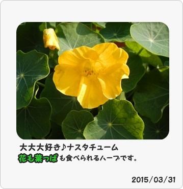 27-4-1-20_201504011608164d0.jpg