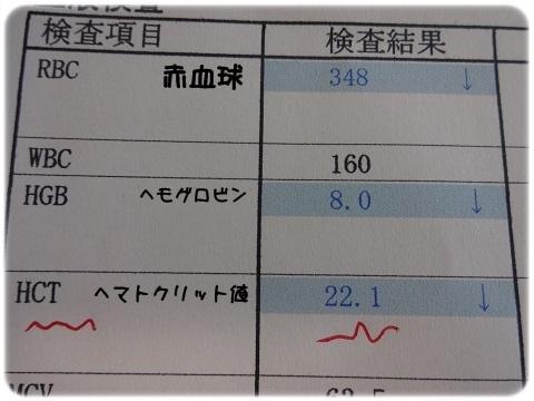 2012_01011959.jpg