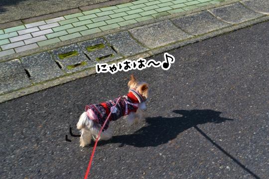 冬散歩 (4)