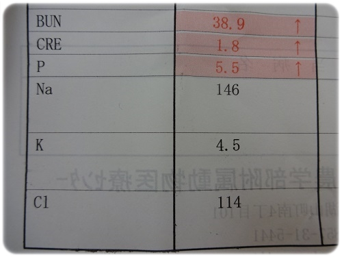 2015 2月 検診 (2)