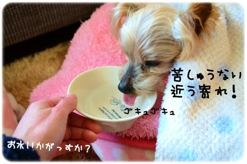 寝たきり (1)
