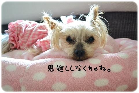 供血犬 (3)
