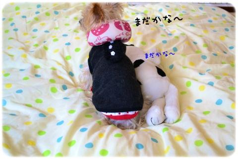 おかえり~2015春~ (3)
