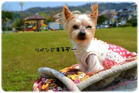 バッグin散歩 (1)
