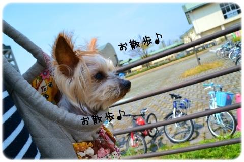 バッグin散歩 (2)