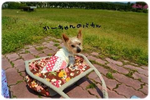 バッグin散歩 (3)