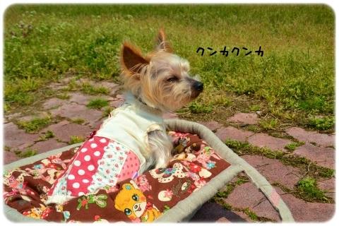 バッグin散歩 (4)