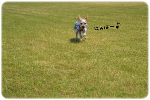 公園リベンジ (4)