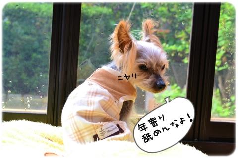 ヤラセじゃない。 (2)