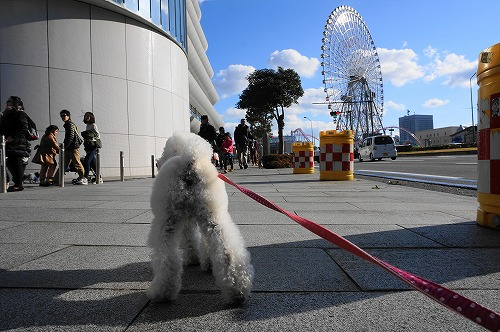 横浜ランチ2